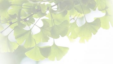gingko_slide